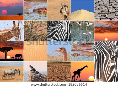 Africa animals and landscapes collage photos  - stock photo