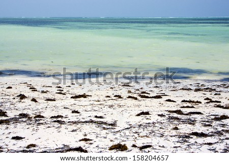 africa coastline froth foam  in the  blue lagoon relax  of zanzibar