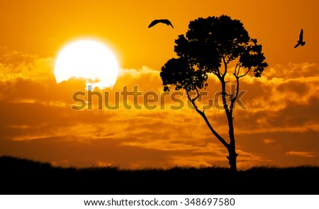 Africa safari nature sunset. Element of design. - stock photo