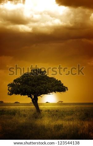 Africa Sunset - stock photo
