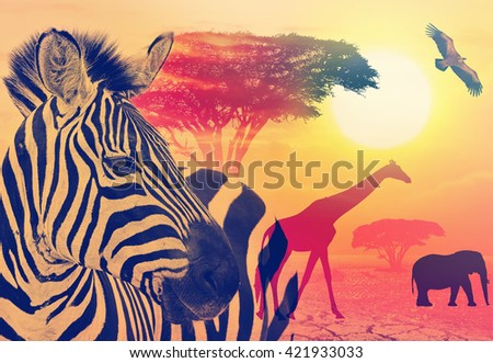 Africa wildlife against beautiful sunset in the Serengeti Park. Tanzania. Africa wildlife and nature concept. Heat, drought and global warming. Toned colors vintage image