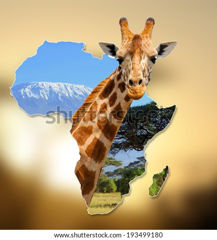 Africa Wildlife Map Design with geraffe and kilimanjaro - stock photo