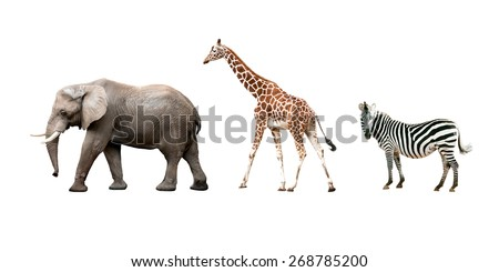 African animals (Elephant, Giraffe, Zebra) isolated on white background - stock photo