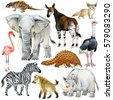 african animals watercolor...