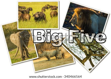 African Big Five animals collage, Buffalo, Elephant, Leopard, Black Rhino and Lion in national parks and african reserves like Kruger, Etosha and the Serengeti on white  background. - stock photo
