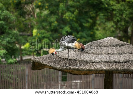 African Crowned Crane - stock photo