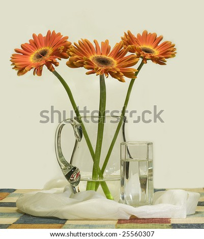 African daisy and glass