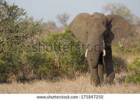 African Darter in Kruger National park - stock photo
