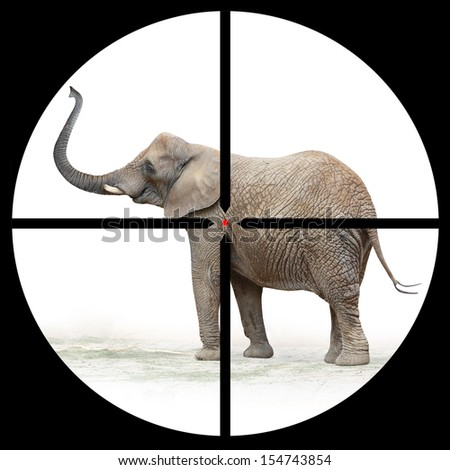 African elephant in the Hunter's scope.  - stock photo