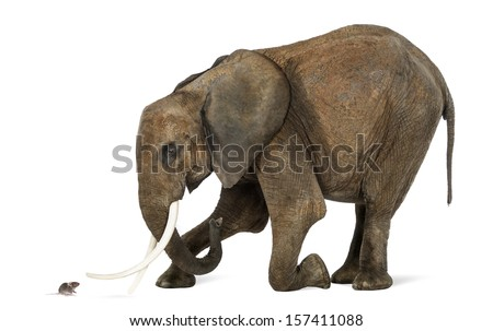 African elephant kneeling in front of a mouse, isolated on white - stock photo