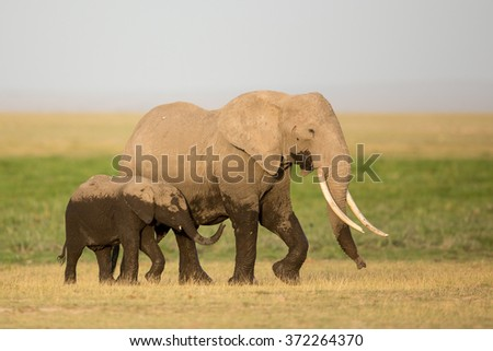 African Elephant mother and calf, Amboseli, Kenya - stock photo