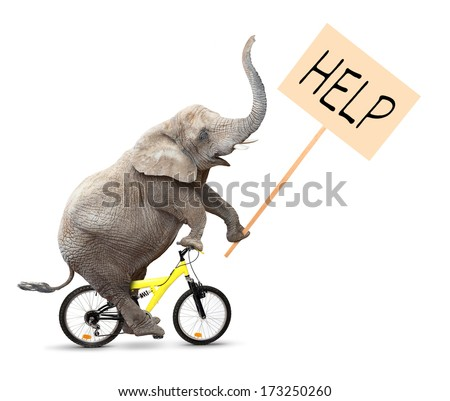 African elephant on a bike holding protest sign with space for your text. - stock photo