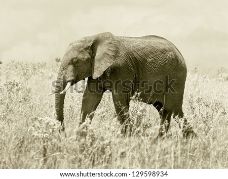 African elephant on the Masai Mara National Reserve - Kenya, Eastern Africa (stylized retro) - stock photo