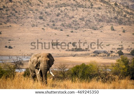 African Elephant, Pilanesberg National Park, South Africa
