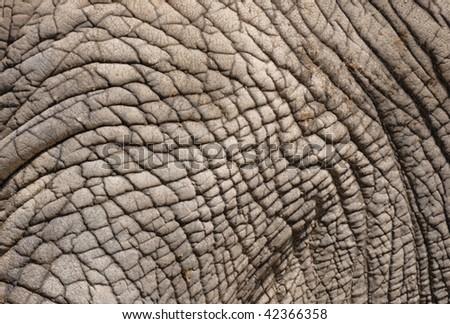 African elephant skin - stock photo
