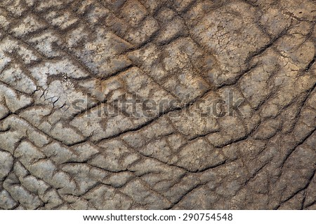 African elephant skin detail - stock photo