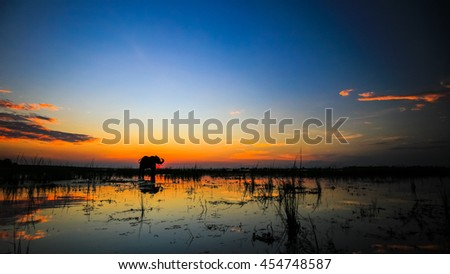 African elephant standing in river at sunset with water reflection, Africa