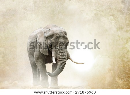 african elephant walking in desert over a grunge background