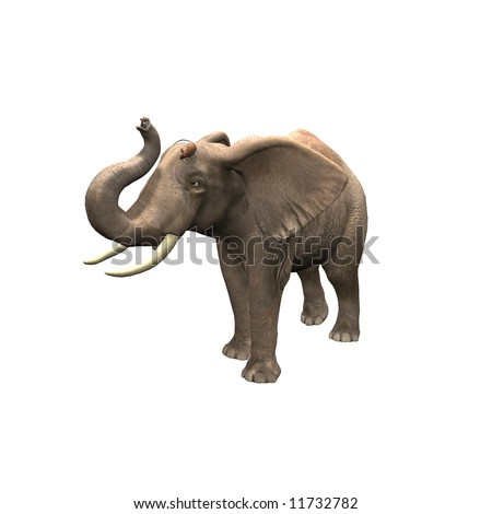 African Elephant with mice