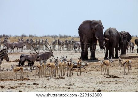 African elephants at Gemsbok, sprinbok and zebras at waterhole in Chobe National Park, Namibia - stock photo