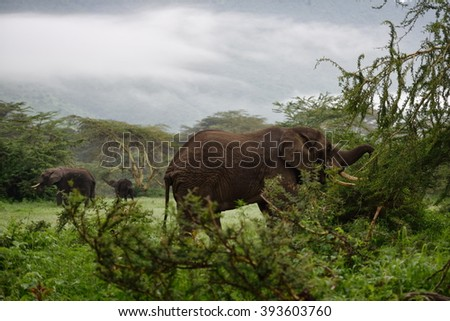 African elephants in the Ngorongoro Crater, Tanzania - stock photo