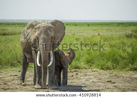 African female elephant and a baby elephant found in the Amboseli national park (Kenya)