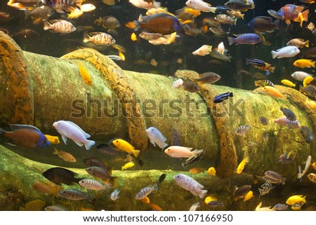 African fishes - stock photo