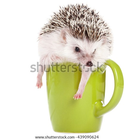African hedgehog and green cup on white background - stock photo