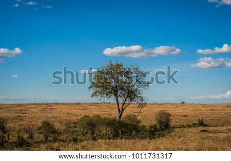 African landscape with a tree  Kenya in Masai Mara