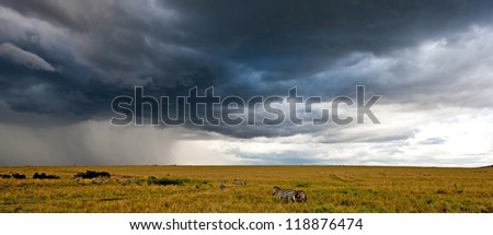 African landscape with storny sky and zebras, Maasai Mara, Kenya - stock photo
