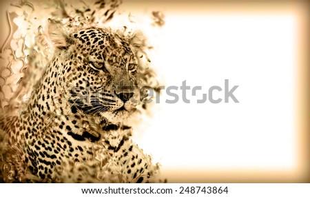 African leopard illustration  - stock photo