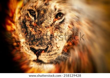 African lion illustration  - stock photo