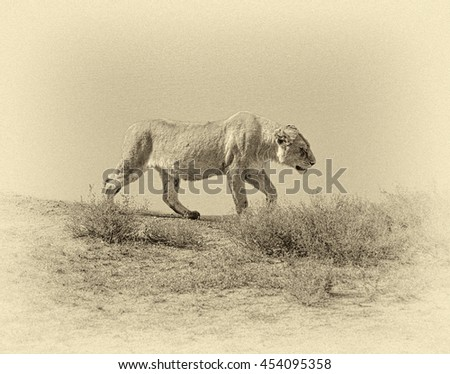 African lions near watering hole in Crater Ngorongoro National Park - Tanzania, Africa (stylized retro)