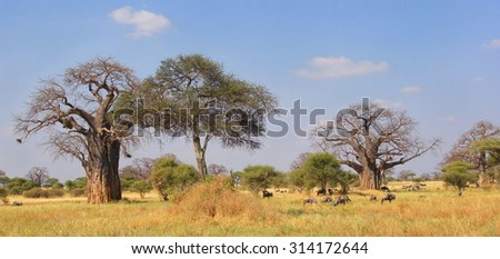 African National park with a amazing nature  and wildlife walking through the landscape