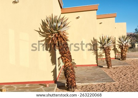 African plants next to yellow house. Shot in Warmbad, Namibia. - stock photo