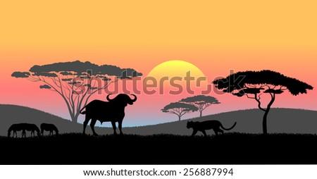 African savanna an evening landscape - stock photo