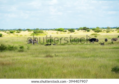 African savanna landscape with animals, South Africa