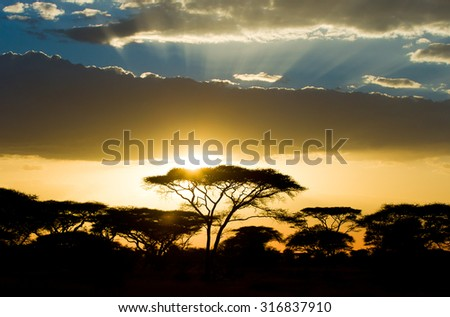 African savannah sunset