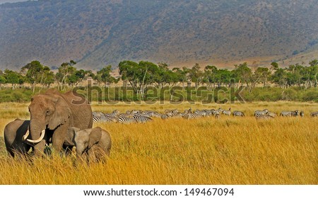 African Savannah with elephants in the foreground and zebras in the background - stock photo