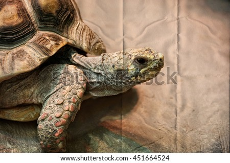 African spurred tortoise is one of the largest species of tortoise in the world. North West African wildlife. Amazing huge turtle. Stunning vintage on a background of folded paper. Creative artwork - stock photo