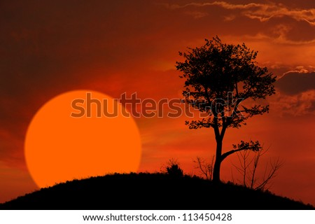 African sunset and tree background