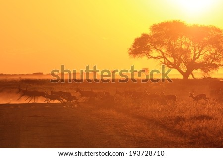 African Sunset - Golden Background of Nature - Speed of Life and Wonder - stock photo