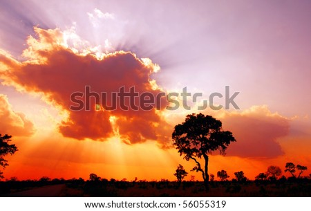 African sunset in the Kruger National Park, South Africa