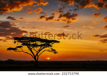 African sunset in the savannah of the Serengeti National Park - stock photo