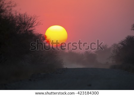 African sunset with a tree silhouette and dusty road