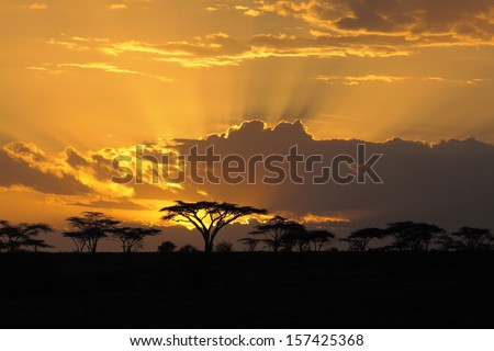 African sunset with acacia in the background - stock photo