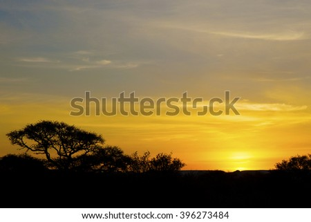 African Sunset with silhouette trees - stock photo