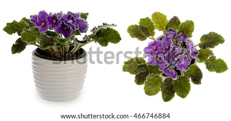 Cache-pot Stock Images, Royalty-Free Images & Vectors   Shutterstock