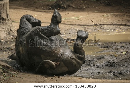 African White Rhino in park - stock photo