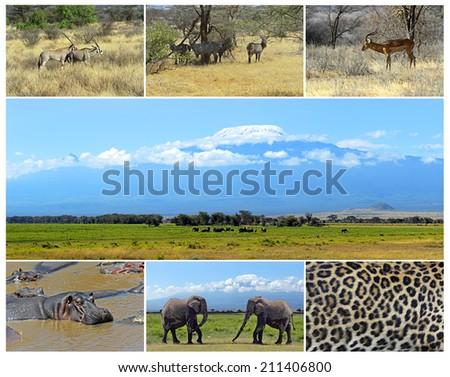 African wild animals safari collage, large group of fauna - stock photo